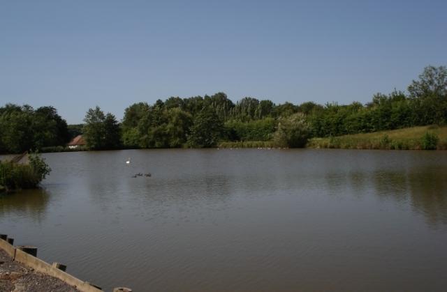 Specimen Lake Hawkhurst Fish Farm